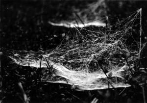 Klein-Spinnennetz