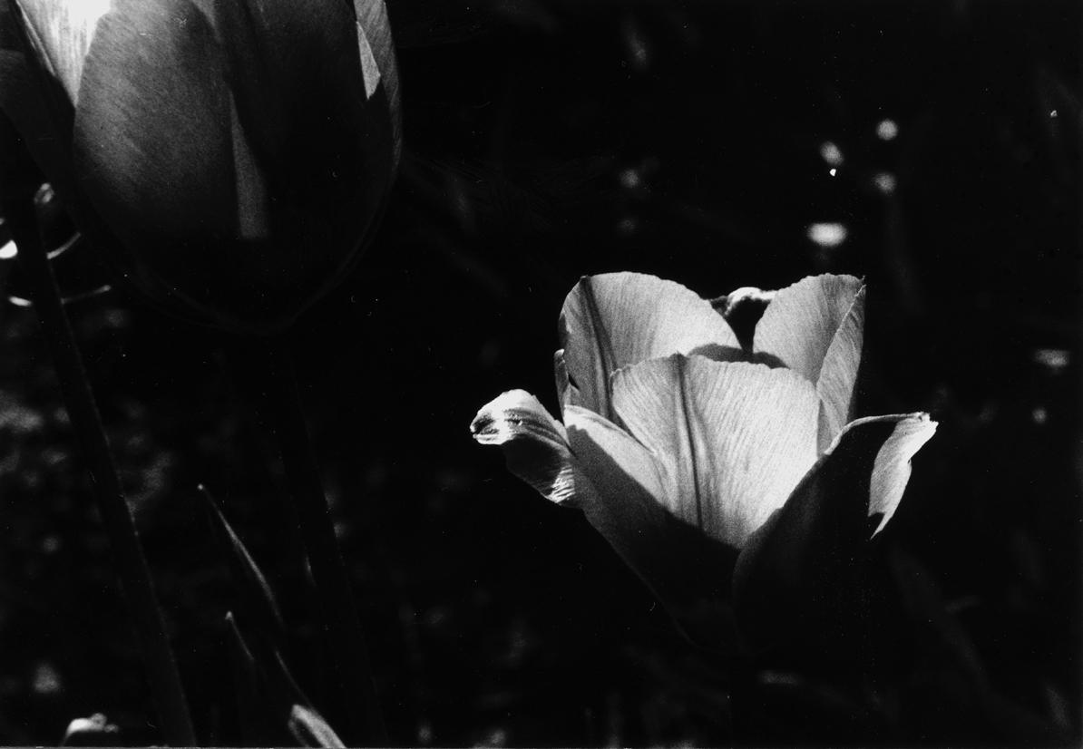 Archiv: Schwarz-weiss Bilder aus dem Frühjahr