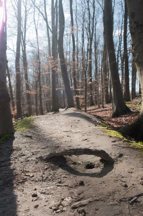 Schlosswald_(2_von_6)