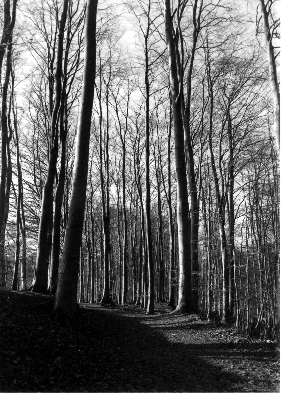 Waldspaziergang analog