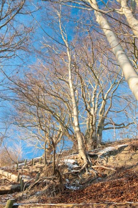 Mächtige Bäume halten den Steilhang über dem Seeufer fest.