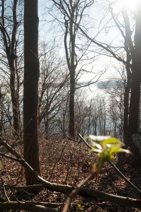 Erste Knospen erzählen vom nahenden Frühling.