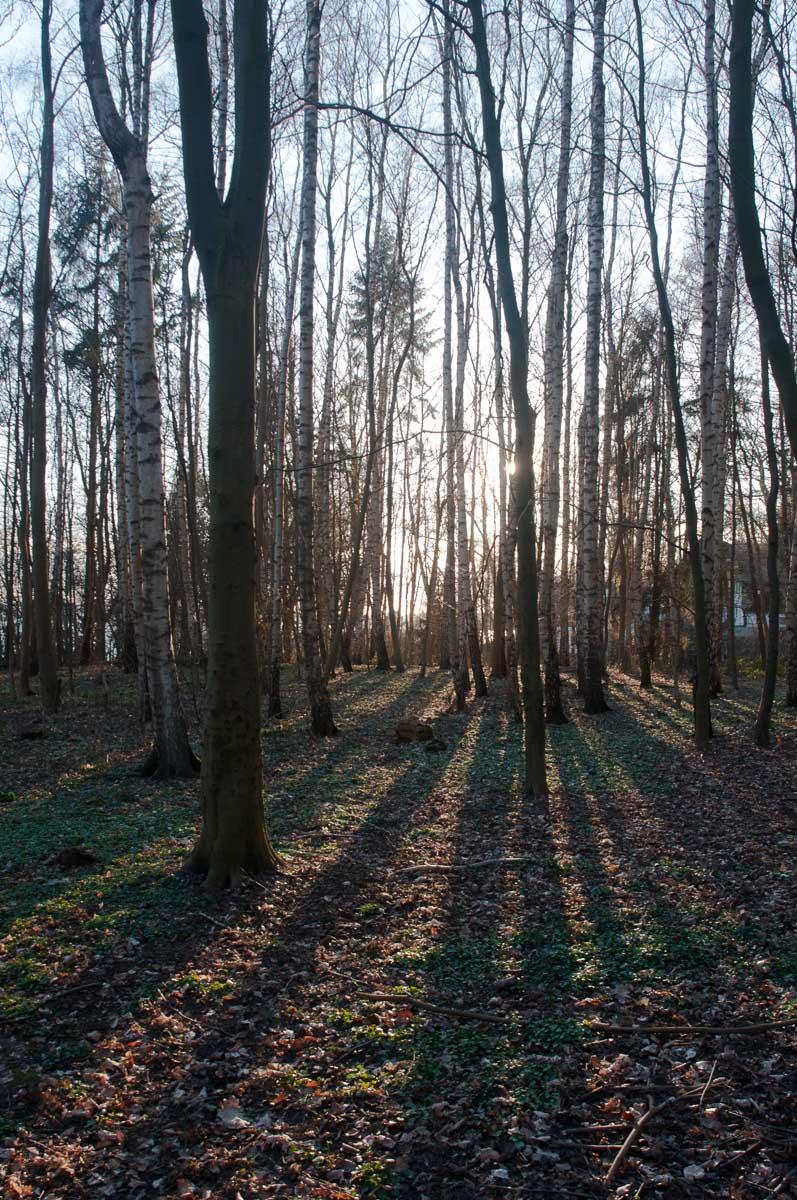 Der Wald der Eichhörnchen.
