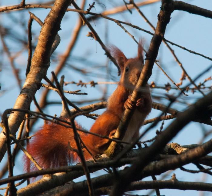 """Neugierig beäugen die Eichhörnchen jeden """"Gast"""" in Ihrem Wald"""
