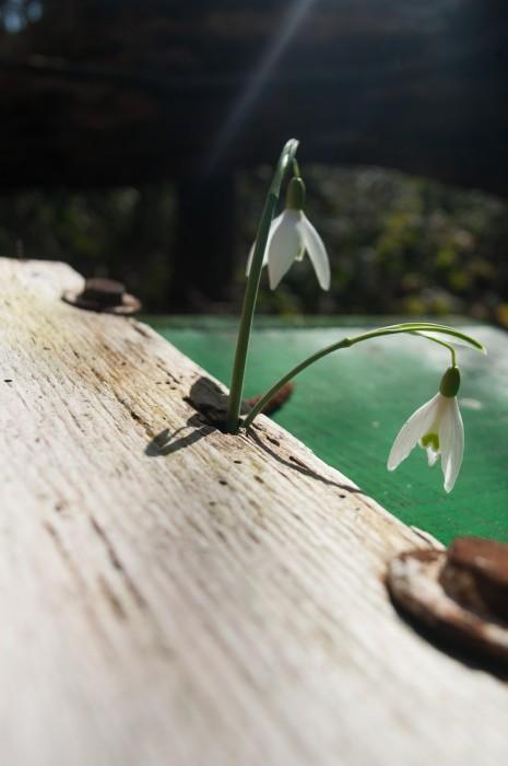 Auf dem Toten wächst neues Leben. - Ein fast österliches Motiv.
