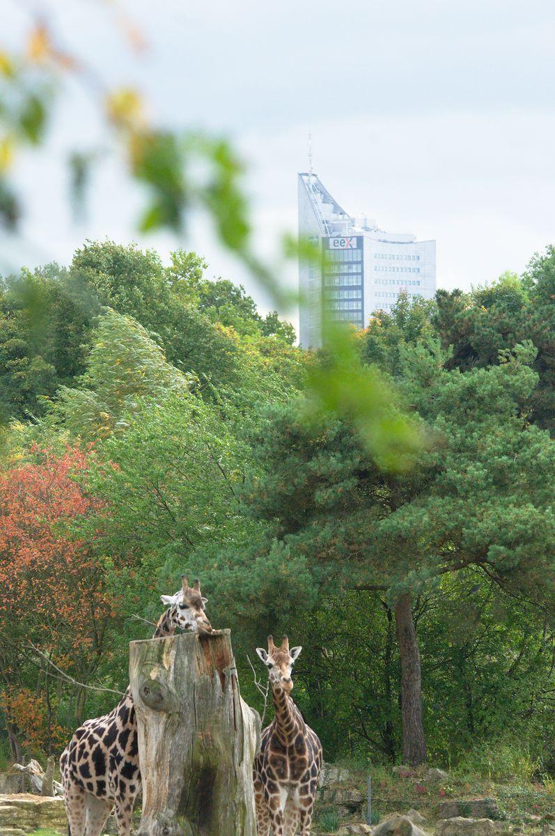 Leipziger Zoo – Erster Eindruck